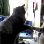 Cats Playing Patty-cake, what they were saying…