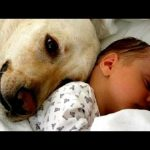 Cats and dogs meeting babies for the first time – Cute animal compilation