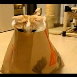 funny and cute cat having fun in a paper bag. this cat is awesome. funnier than garfield